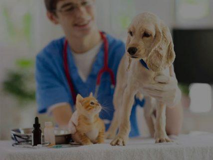 「殺処分や飼育放棄を減らすために」ペット先進国のペットとの出会い方