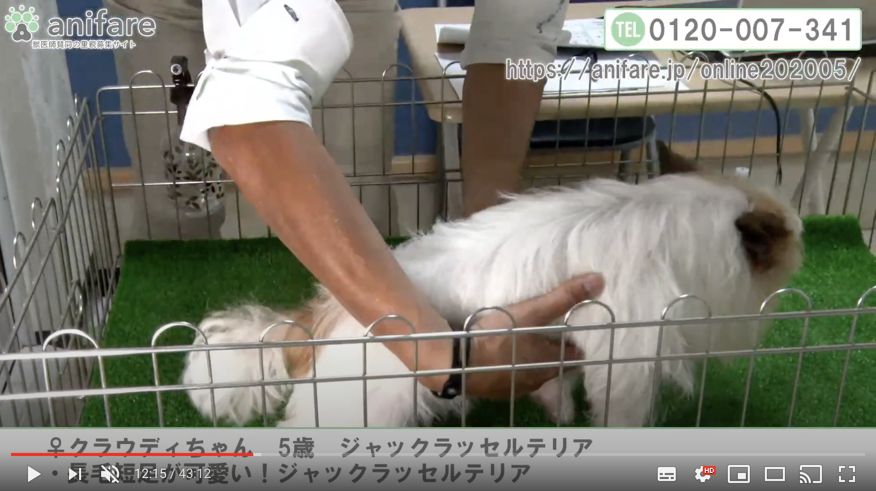 anifareが保護犬の「オンライン譲渡会」を初開催します!