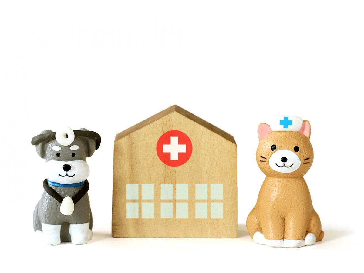 【獣医師コラム】保護犬譲渡の基礎知識 (天野直美 獣医師)