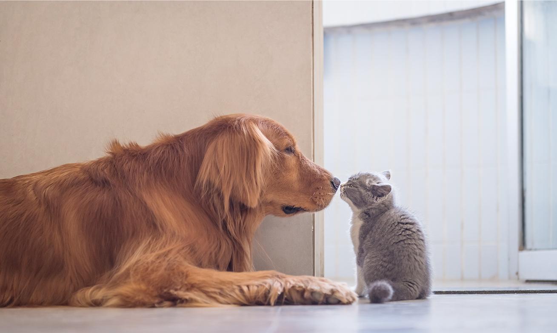 SNSを通じて犬・猫の保護活動に参加できる!SNS寄付キャンペーンを開催!