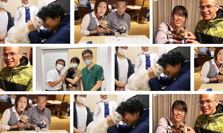 獣医師賛同の里親募集サイト「anifare」(アニフェア)が保護犬・保護猫譲渡数1,000頭を達成