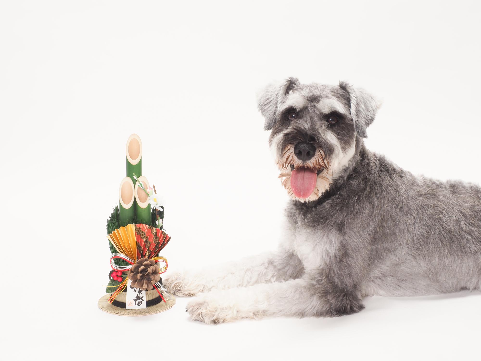 anifareがコロナ禍で保護依頼急増を受けて保護犬譲渡会を開催