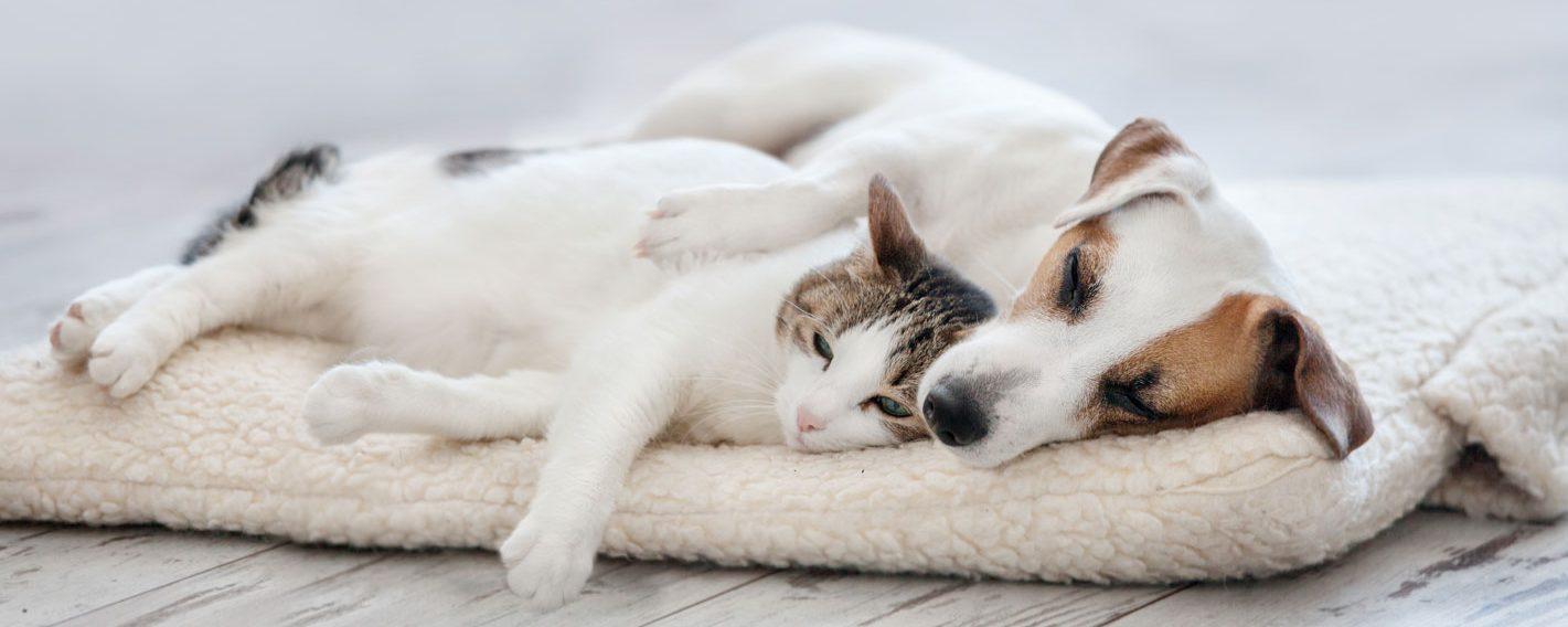 獣医師賛同の里親募集サイト「anifare」(アニフェア)が保護犬・保護猫譲渡数2,000頭を達成