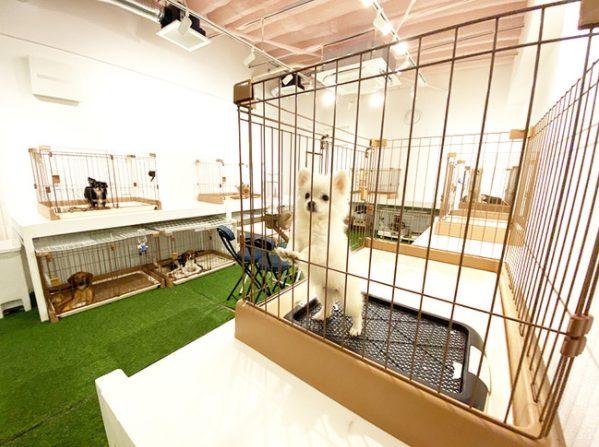 獣医師賛同の里親募集サイト「anifare」(アニフェア)がクラウドファンディングによ る資金調達を行い、東京センターの拡張工事を実施しました。